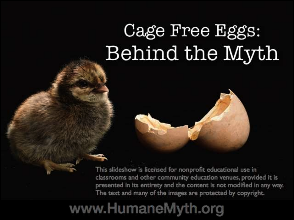 Myth about cage-free eggs