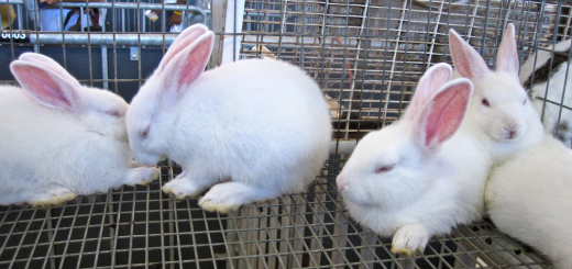 Stop Animal Testing on Cosmetics