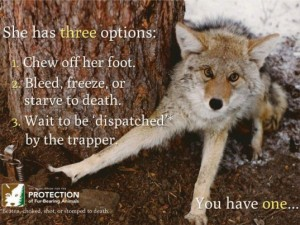 The ugly side of the fur industry