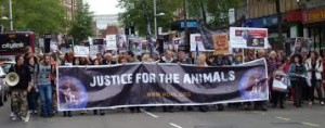 Effective Ways to Advocate for Animals