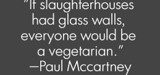 Paul McCartney being vegetarian