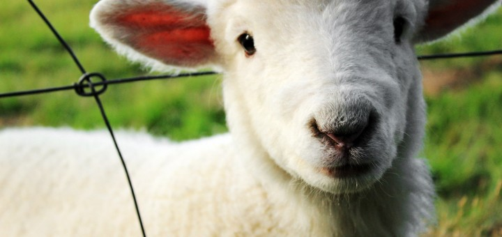Simple Easy Ways to Advocate for Animals