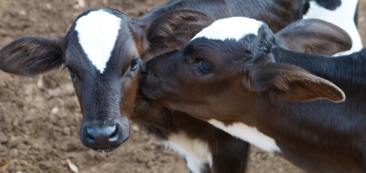 List of Animal Sanctuaries in the U.S.