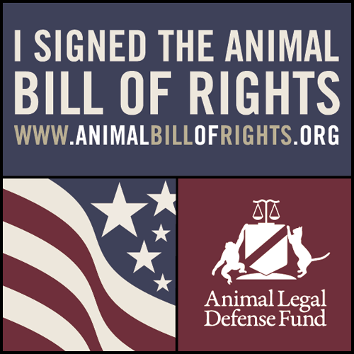 Signing Online Petitions Really Does Help Animals