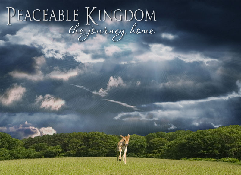 Documentary Film: Peaceable Kingdom, the Journey Home
