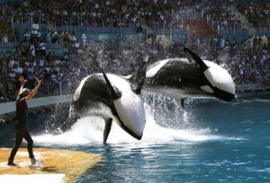 Documentary Film Blackfish, The Truth Behind SeaWorld
