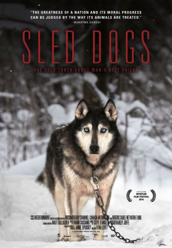 Used Car Factory >> Sled Dogs, Exposing the Cruel and Inhumane Truth Behind ...