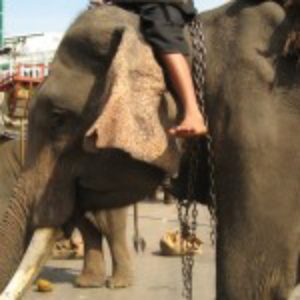 How I Became an Elephant, the Dark Practices and World of Cruelty Behind Elephants Used for Tourism and Entertainment