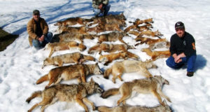 HUNTING AND THE WAR ON WILDLIFE