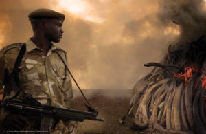 The Ivory Game - Black Money, Black Markets, Illegal Arms, and the War on Elephants