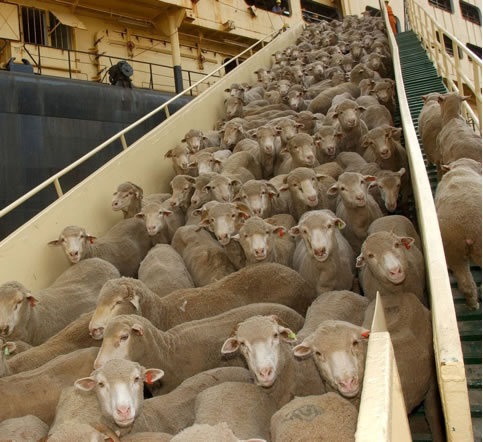 live export Export email contacts to csv file  it is necessary to sign-on with each live id in windows live mail to have access to and export that account's contact.