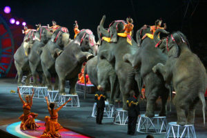 Circuses, Zoos and Amusement Parks