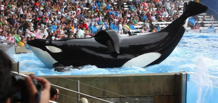 DOLPHINARIUMS, MARINE MAMMAL PARKS AND AQUARIUMS