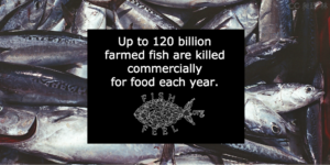 Why Eating Fish is Destroying Our Oceans and Crashing World Fish Stocks