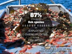 Fishing and the Depletion of our Oceans