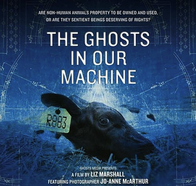 ghost in our machine
