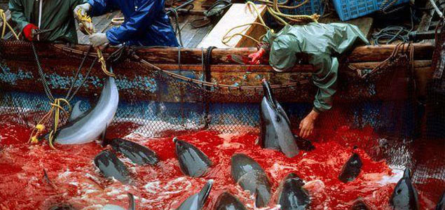 The Cove, The Annual Dolphin Slaughter in Taiji, Japan