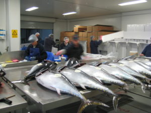 Sushi The Global Catch, A Documentary Film