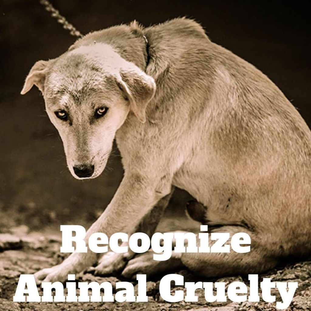 How To Recognize The Signs Of Animal Cruelty And Neglect