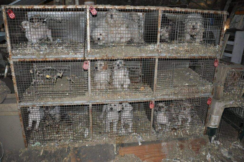 Puppy Mills, Commercial and Backyard Dog Breeders